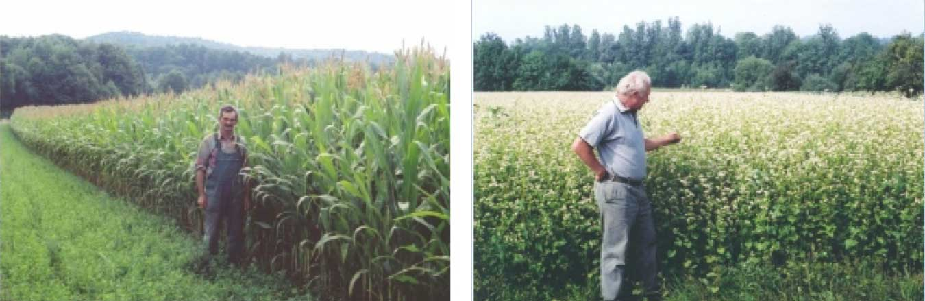 Greengold-Landwirtschaft